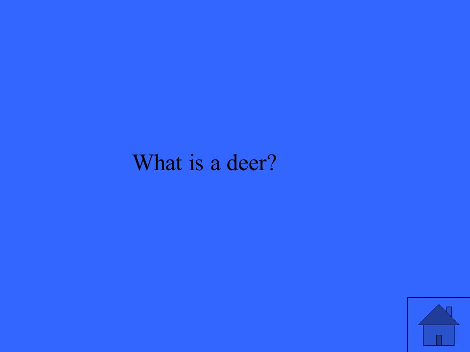What is a deer