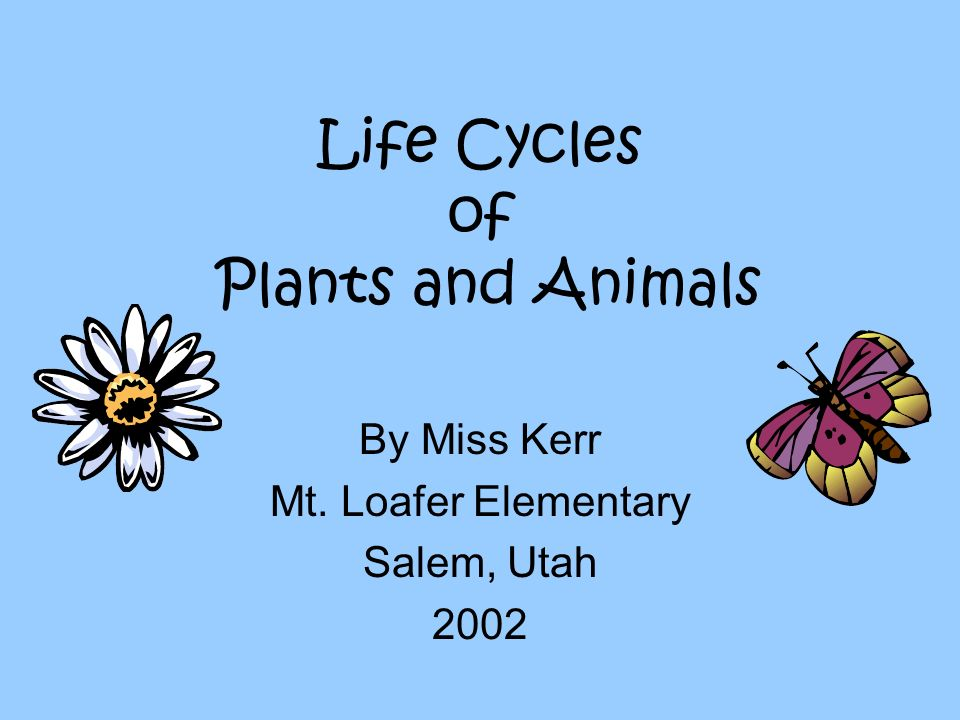 Life Cycles of Plants and Animals By Miss Kerr Mt. Loafer Elementary Salem, Utah 2002