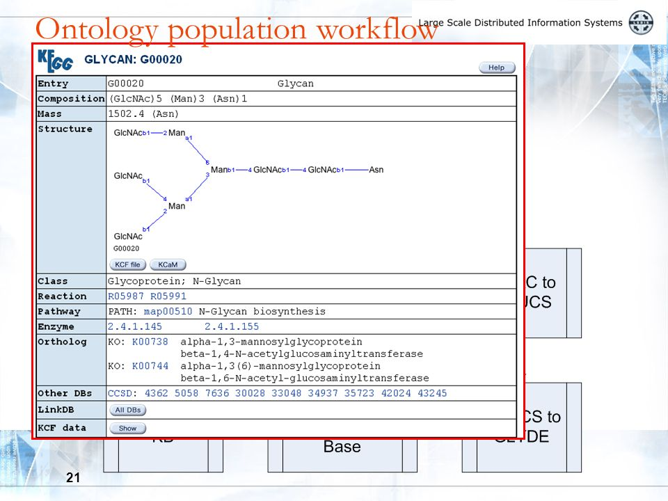 21 Ontology population workflow