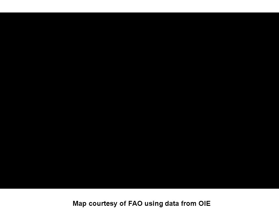 and FAO Map courtesy of FAO using data from OIE