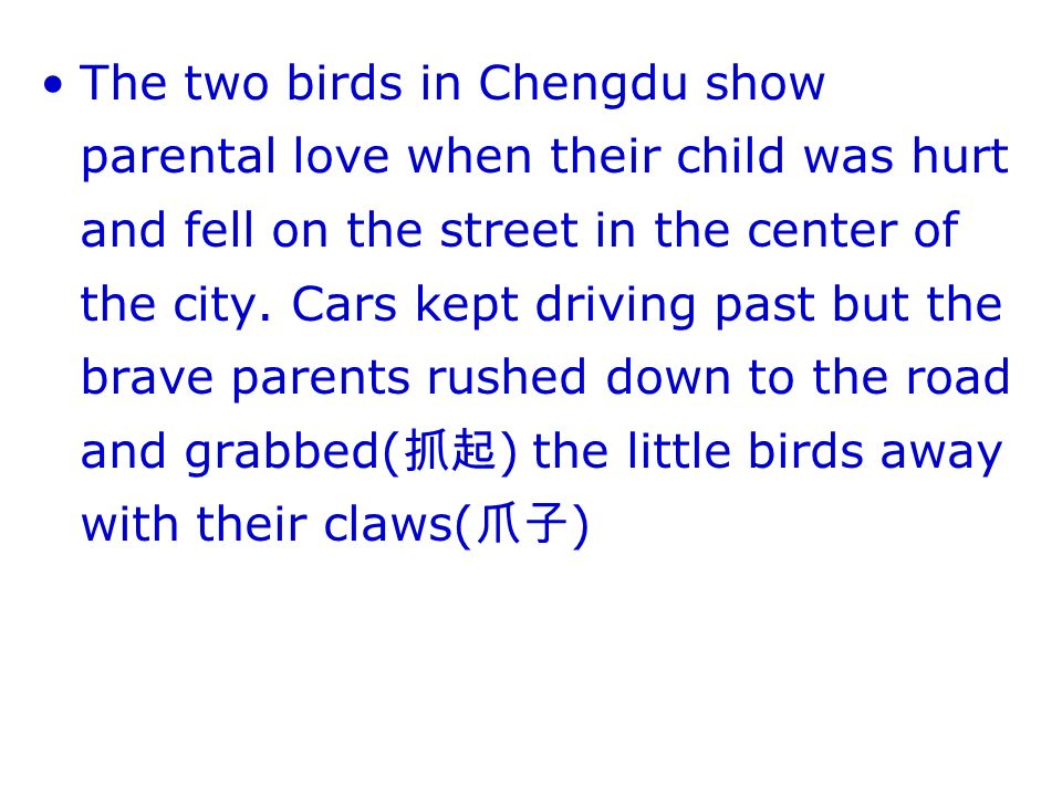 The two birds in Chengdu show parental love when their child was hurt and fell on the street in the center of the city.