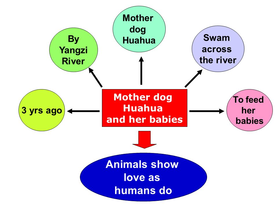 Mother dog Huahua and her babies 3 yrs ago Mother dog Huahua To feed her babies By Yangzi River Swam across the river Animals show love as humans do