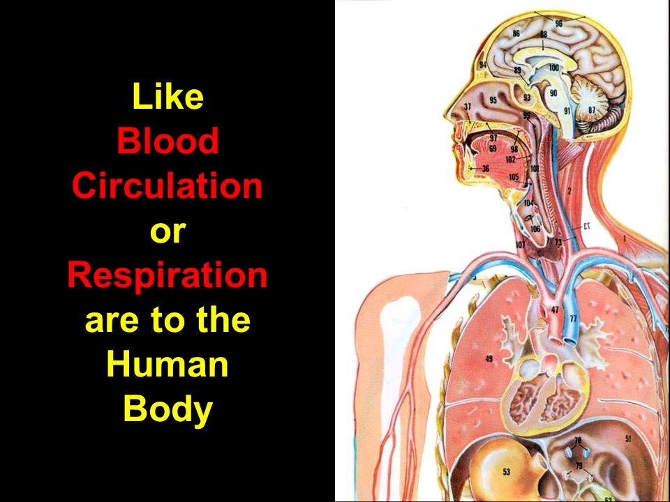 Like Blood Circulation or Respiration are to the Human Body