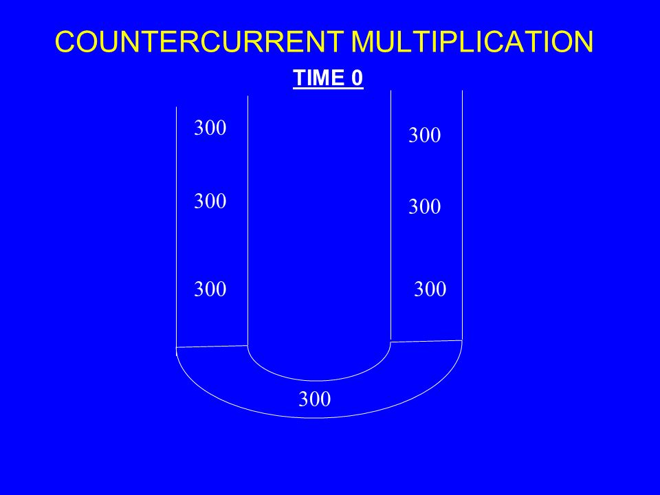 COUNTERCURRENT MULTIPLICATION 300 TIME 0