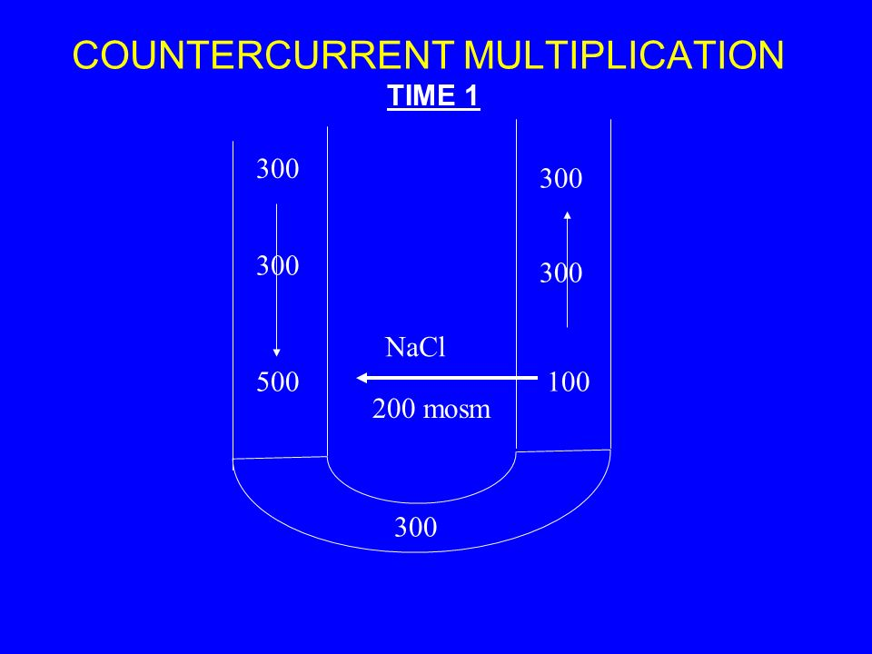 COUNTERCURRENT MULTIPLICATION 300 500100 300 TIME 1 NaCl 200 mosm