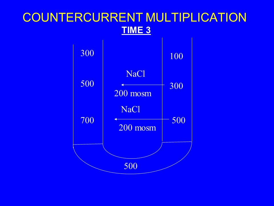 COUNTERCURRENT MULTIPLICATION 300 500 700500 300 100 TIME 3 NaCl 200 mosm NaCl 200 mosm