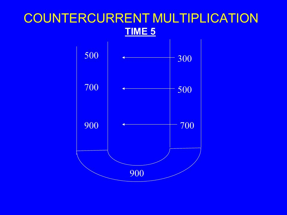 COUNTERCURRENT MULTIPLICATION 500 900 700 900700 500 300 TIME 5