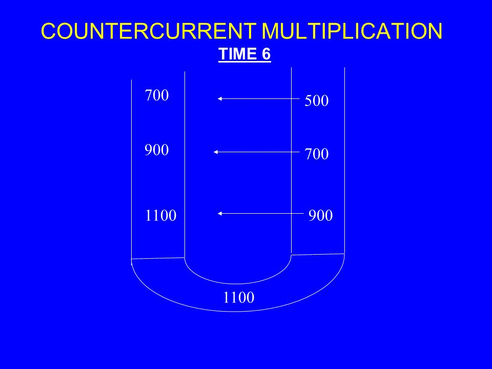 COUNTERCURRENT MULTIPLICATION 700 1100 900 1100900 700 500 TIME 6