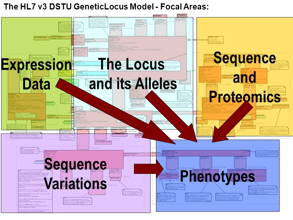 Haifa Research Lab 3 The Locus and its Alleles Sequence Variations Expression Data Sequence and Proteomics Phenotypes The HL7 v3 DSTU GeneticLocus Model - Focal Areas: