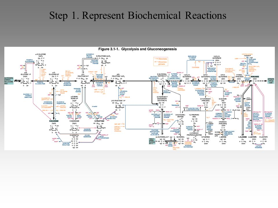 Step 1. Represent Biochemical Reactions