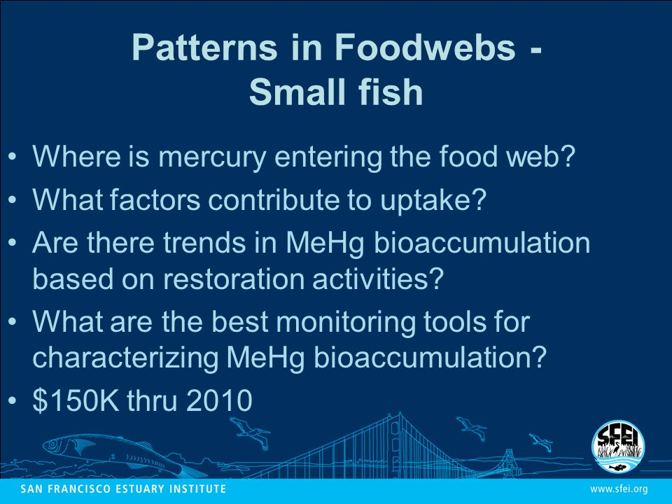 Patterns in Foodwebs - Small fish Where is mercury entering the food web.