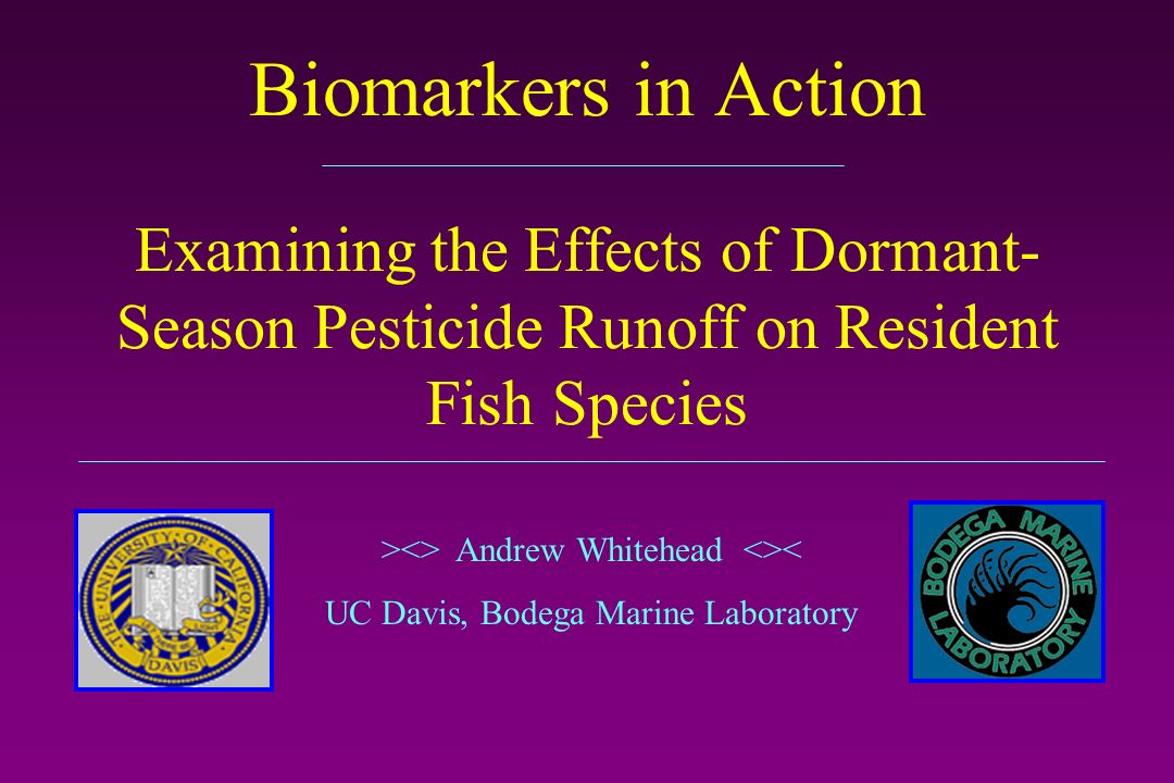 Biomarkers in Action Examining the Effects of Dormant- Season Pesticide Runoff on Resident Fish Species ><> Andrew Whitehead <>< UC Davis, Bodega Marine Laboratory