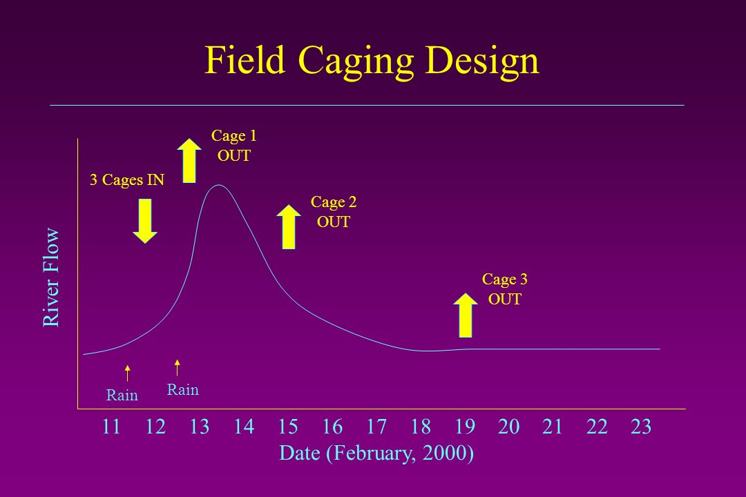 Field Caging Design 11 12 13 14 15 16 17 18 19 20 21 22 23 Date (February, 2000) River Flow Rain Cage 1 OUT Cage 3 OUT 3 Cages IN Cage 2 OUT