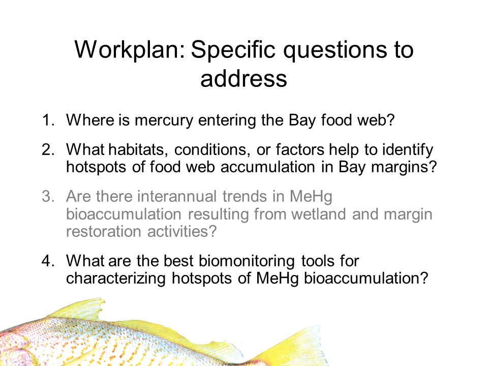 Workplan: Specific questions to address 1.Where is mercury entering the Bay food web.