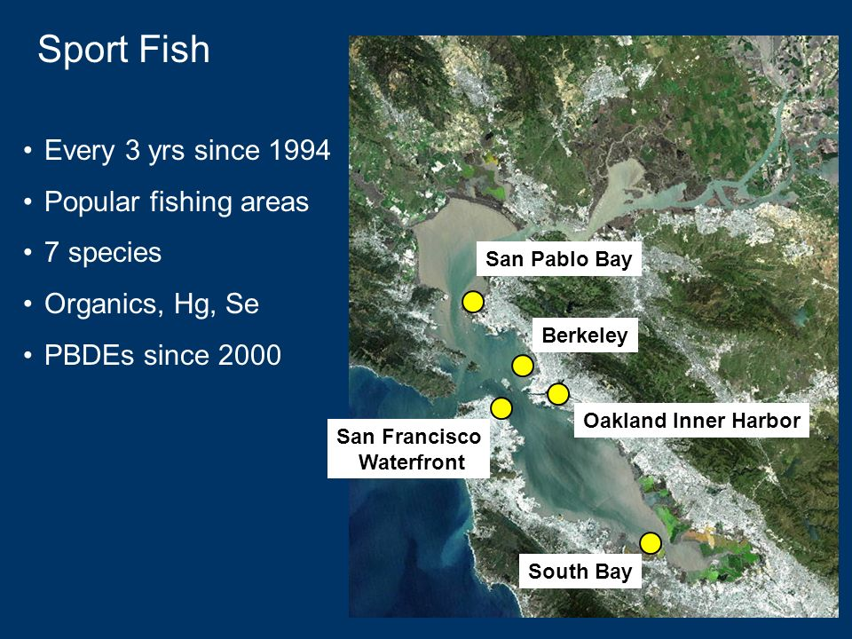 Sport Fish Every 3 yrs since 1994 Popular fishing areas 7 species Organics, Hg, Se PBDEs since 2000 South Bay Oakland Inner Harbor Berkeley San Francisco Waterfront San Pablo Bay