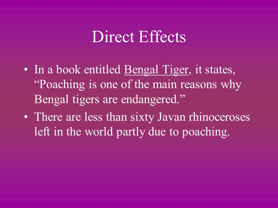 Direct Effects In a book entitled Bengal Tiger, it states, Poaching is one of the main reasons why Bengal tigers are endangered.