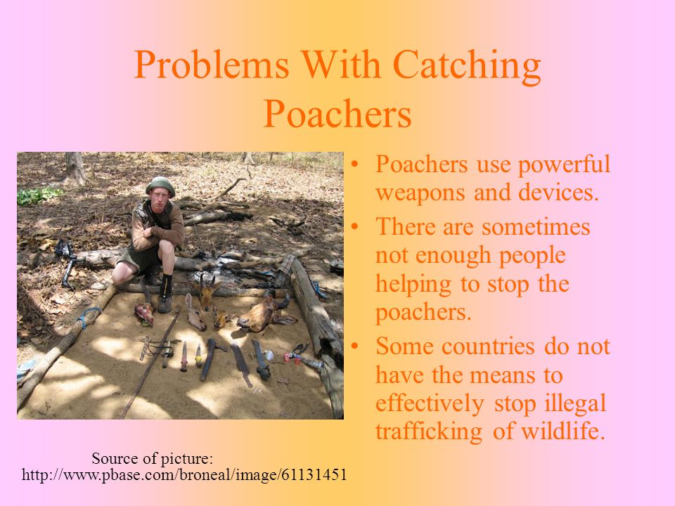 Problems With Catching Poachers Poachers use powerful weapons and devices.