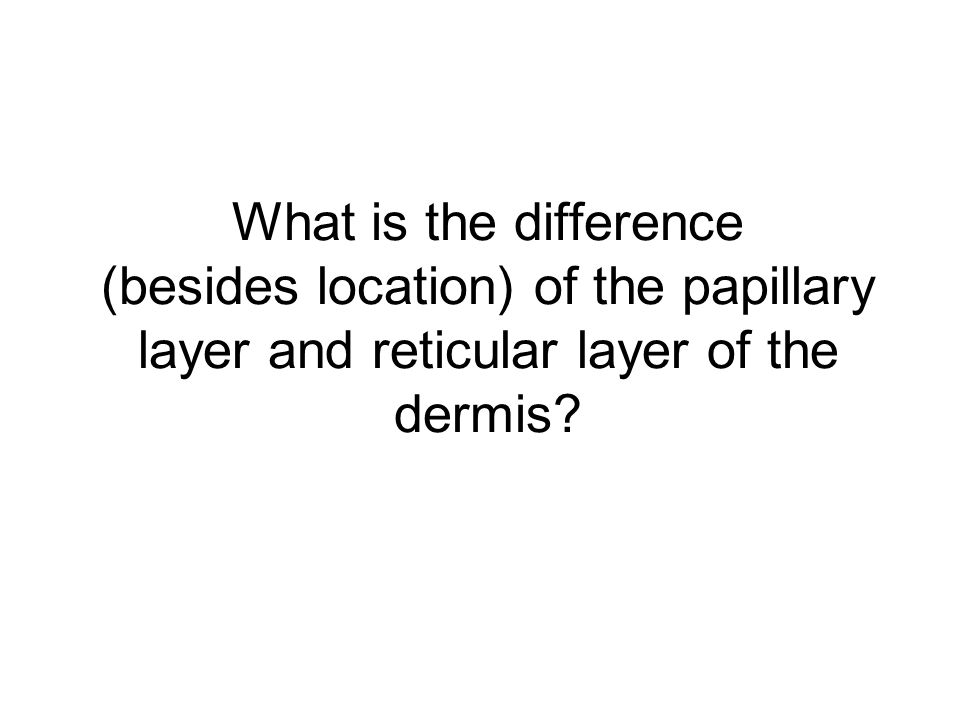 What is the difference (besides location) of the papillary layer and reticular layer of the dermis