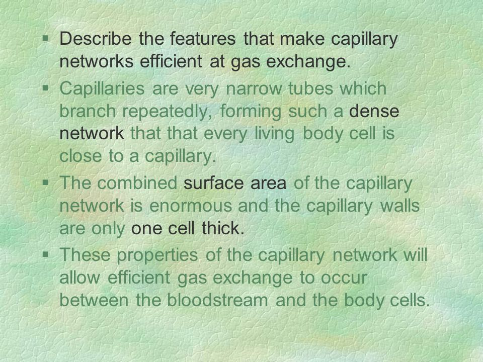 §Describe the features that make capillary networks efficient at gas exchange.