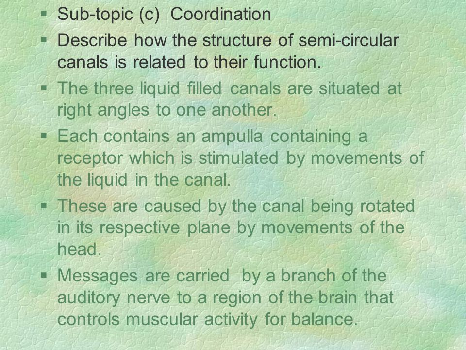 §Sub-topic (c) Coordination §Describe how the structure of semi-circular canals is related to their function.