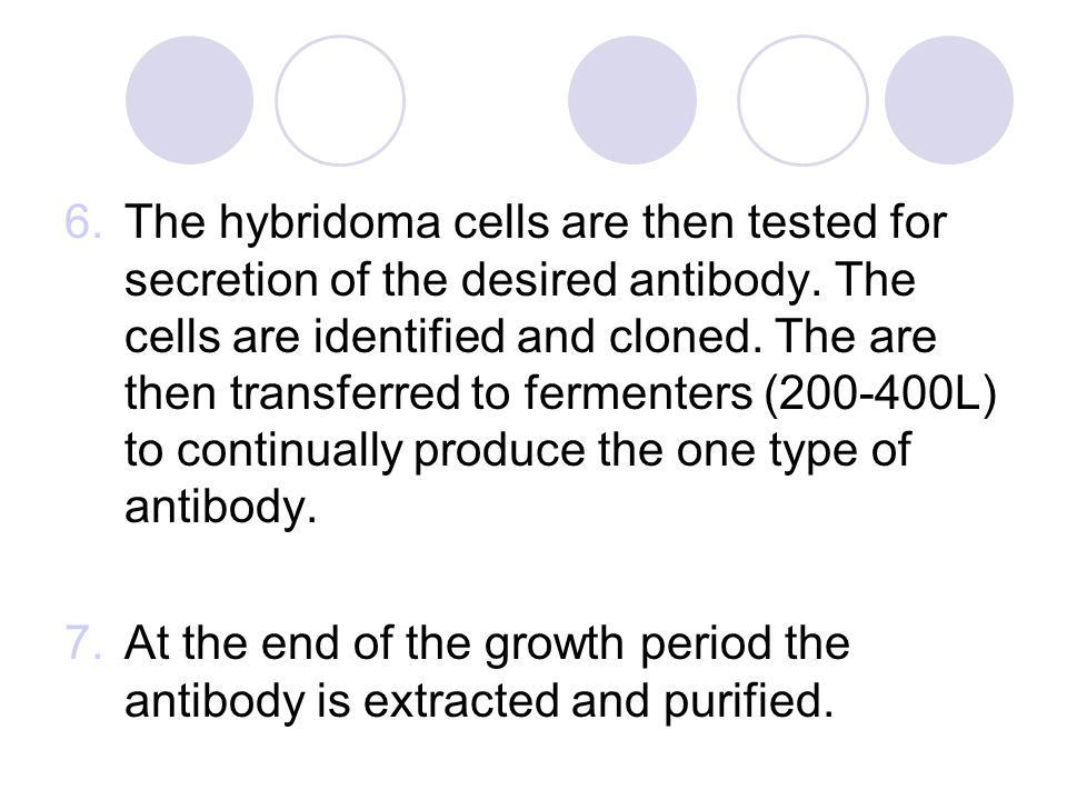 6.The hybridoma cells are then tested for secretion of the desired antibody.