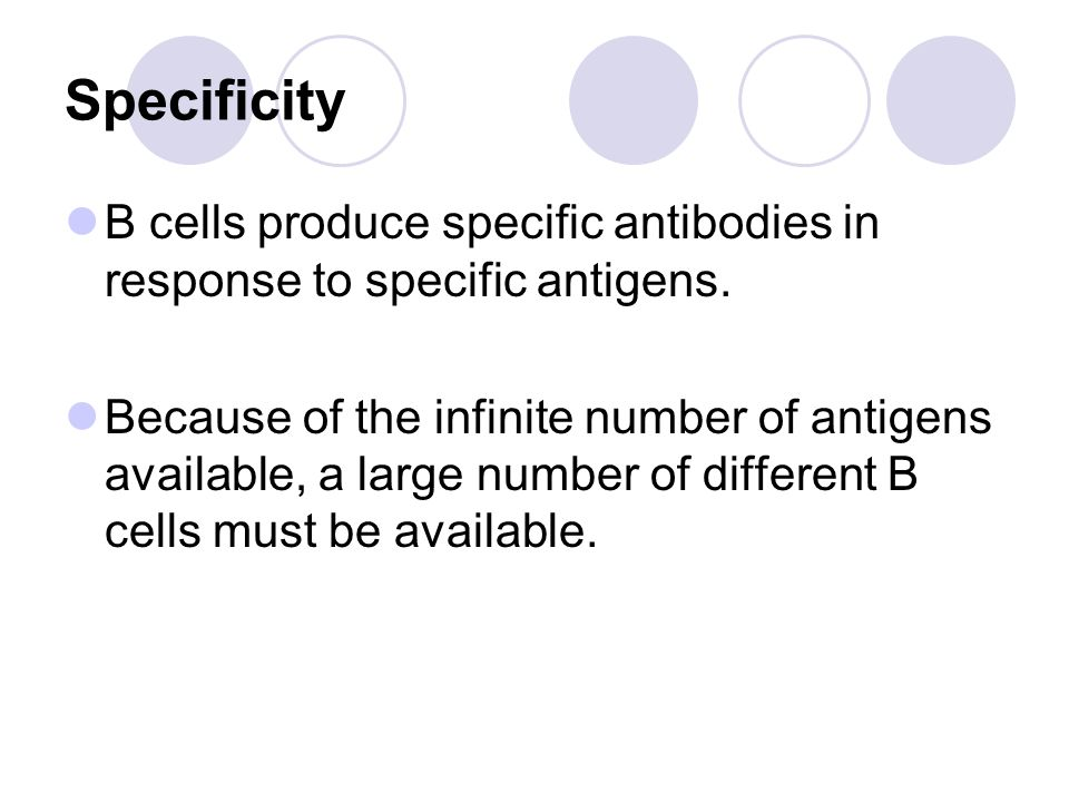 Specificity B cells produce specific antibodies in response to specific antigens.