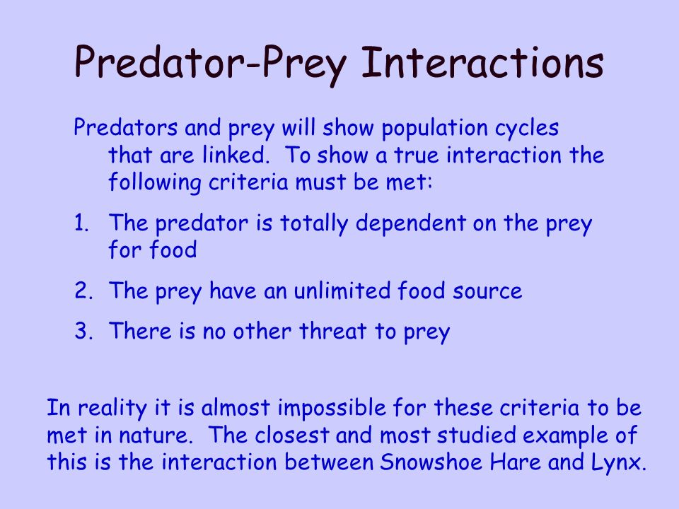 Predator-Prey Interactions Predators and prey will show population cycles that are linked.
