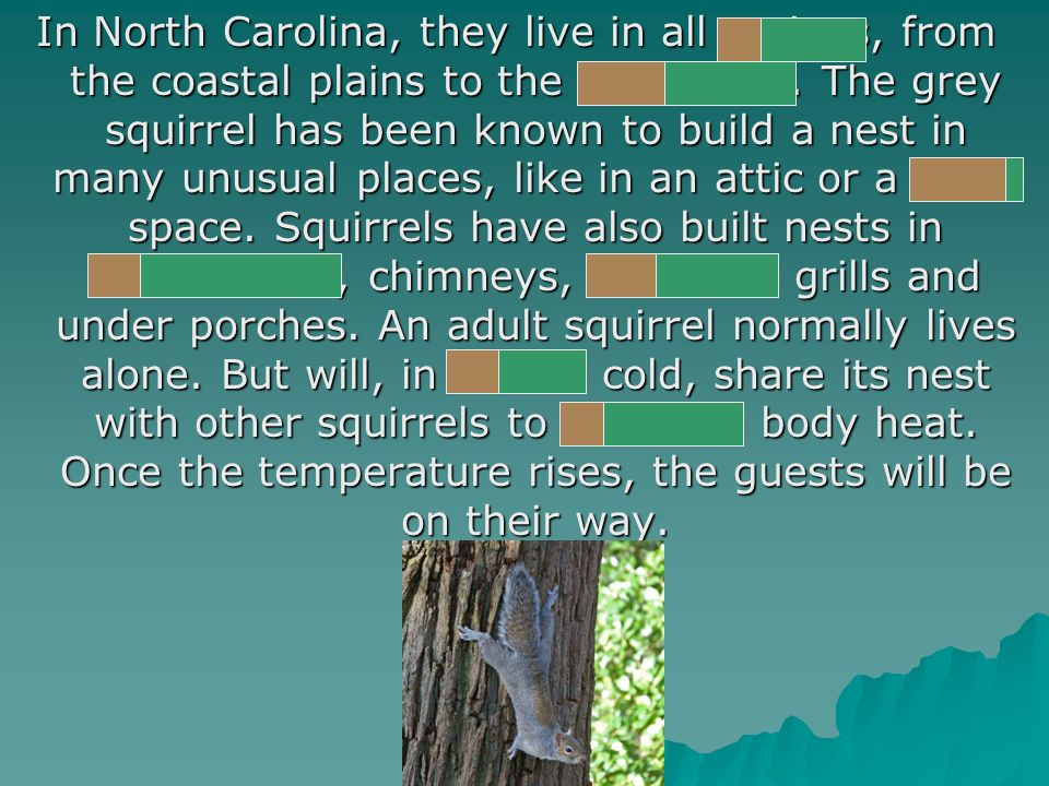 In North Carolina, they live in all regions, from the coastal plains to the mountains.