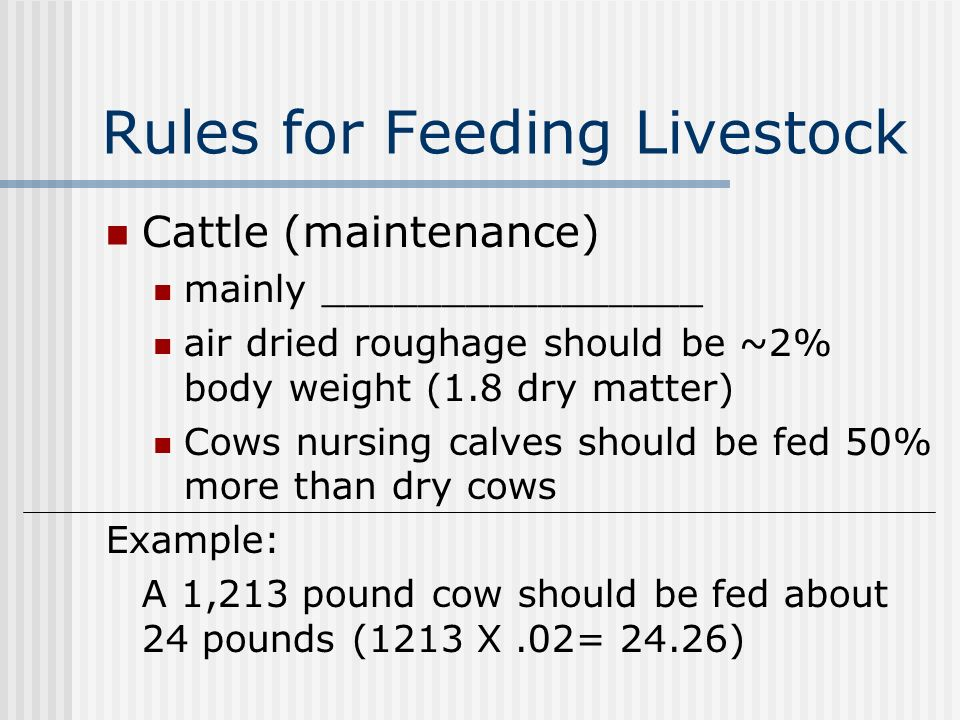 Rules for Feeding Livestock Cattle (maintenance) mainly ________________ air dried roughage should be ~2% body weight (1.8 dry matter) Cows nursing calves should be fed 50% more than dry cows Example: A 1,213 pound cow should be fed about 24 pounds (1213 X.02= 24.26)
