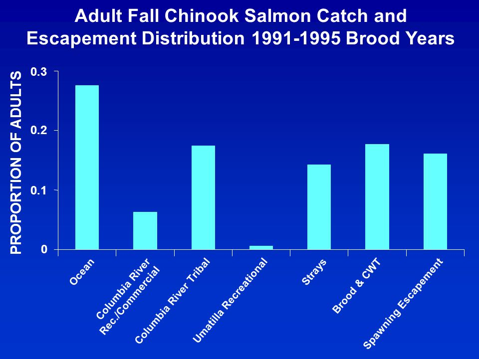 Adult Fall Chinook Salmon Catch and Escapement Distribution 1991-1995 Brood Years PROPORTION OF ADULTS 0 0.1 0.2 0.3 Ocean Columbia River Rec./Commercial Columbia River Tribal Umatilla Recreational Strays Brood & CWT Spawning Escapement