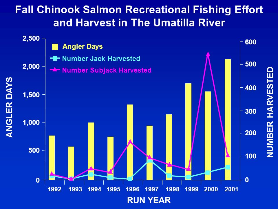 Fall Chinook Salmon Recreational Fishing Effort and Harvest in The Umatilla River 0 500 1,000 1,500 2,000 2,500 199219941995199619971998199920002001 RUN YEAR ANGLER DAYS 0 100 200 300 400 500 600 NUMBER HARVESTED Angler Days Number Jack Harvested Number Subjack Harvested 1993