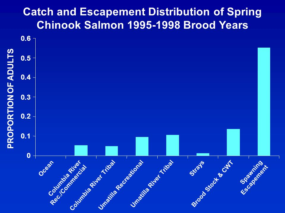 Catch and Escapement Distribution of Spring Chinook Salmon 1995-1998 Brood Years 0 0.1 0.2 0.3 0.4 0.5 0.6 PROPORTION OF ADULTS Columbia River Rec./Commercial Columbia River Tribal Umatilla Recreational Umatilla River Tribal Strays Brood Stock & CWT Spawning Escapement Ocean