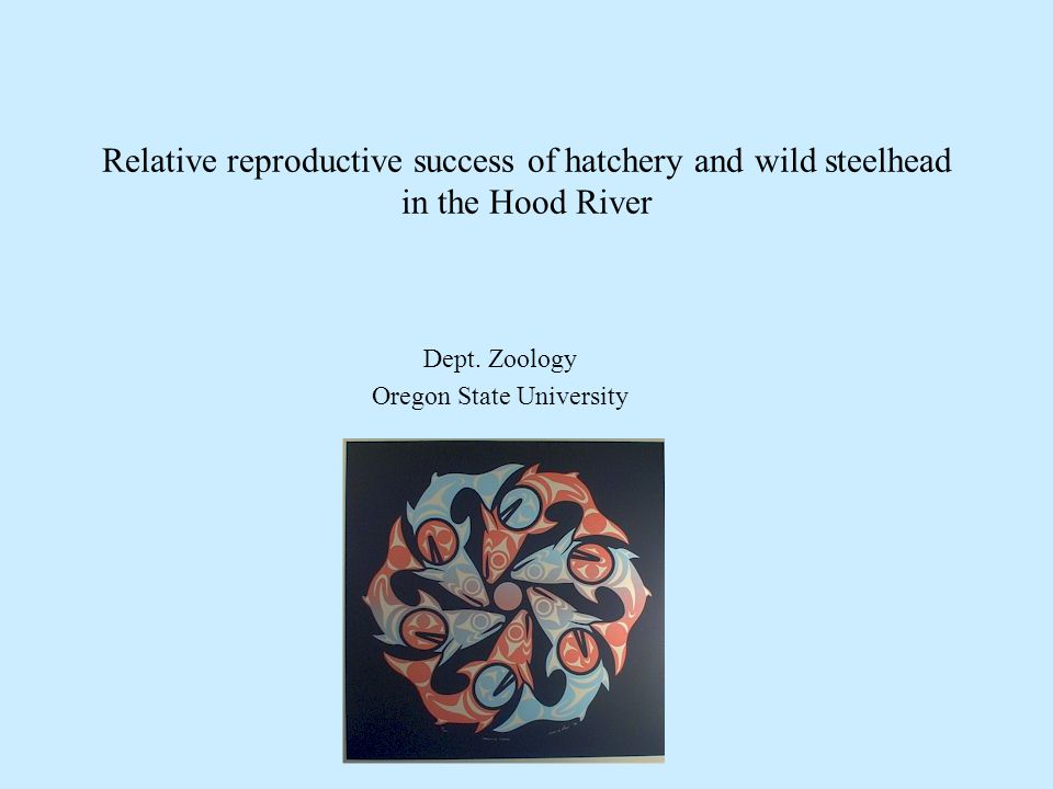 Relative reproductive success of hatchery and wild steelhead in the Hood River Dept.