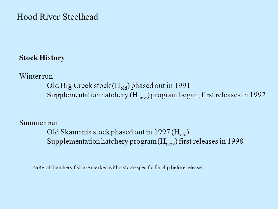 Hood River Steelhead Stock History Winter run Old Big Creek stock (H old ) phased out in 1991 Supplementation hatchery (H new ) program began, first releases in 1992 Summer run Old Skamania stock phased out in 1997 (H old ) Supplementation hatchery program (H new ) first releases in 1998 Note: all hatchery fish are marked with a stock-specific fin clip before release