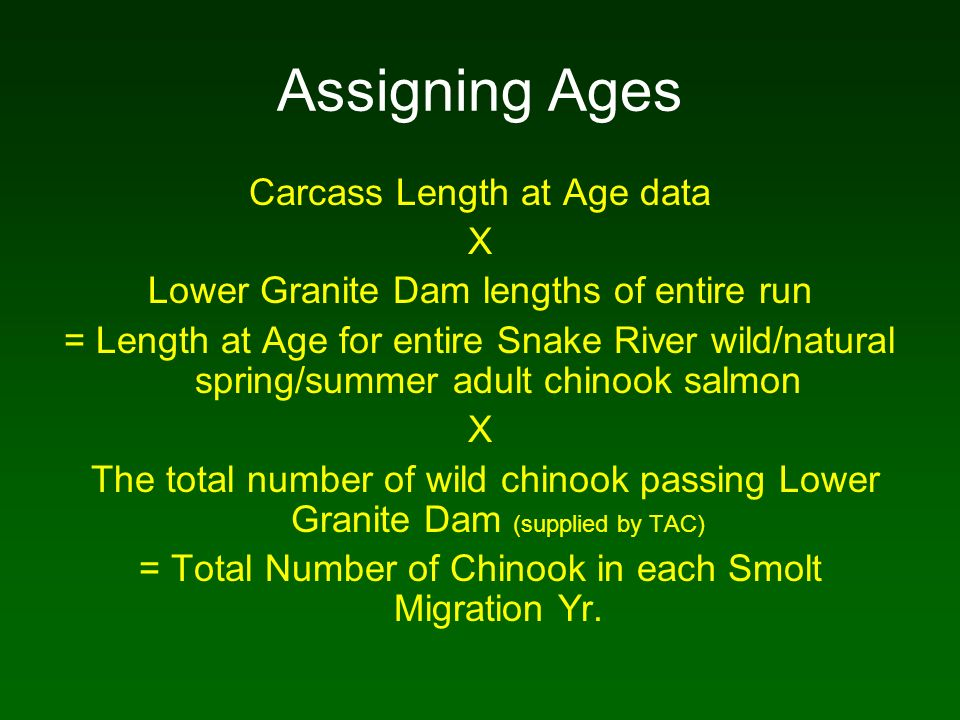 Assigning Ages Carcass Length at Age data X Lower Granite Dam lengths of entire run = Length at Age for entire Snake River wild/natural spring/summer adult chinook salmon X The total number of wild chinook passing Lower Granite Dam (supplied by TAC) = Total Number of Chinook in each Smolt Migration Yr.