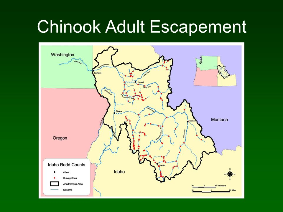 Chinook Adult Escapement