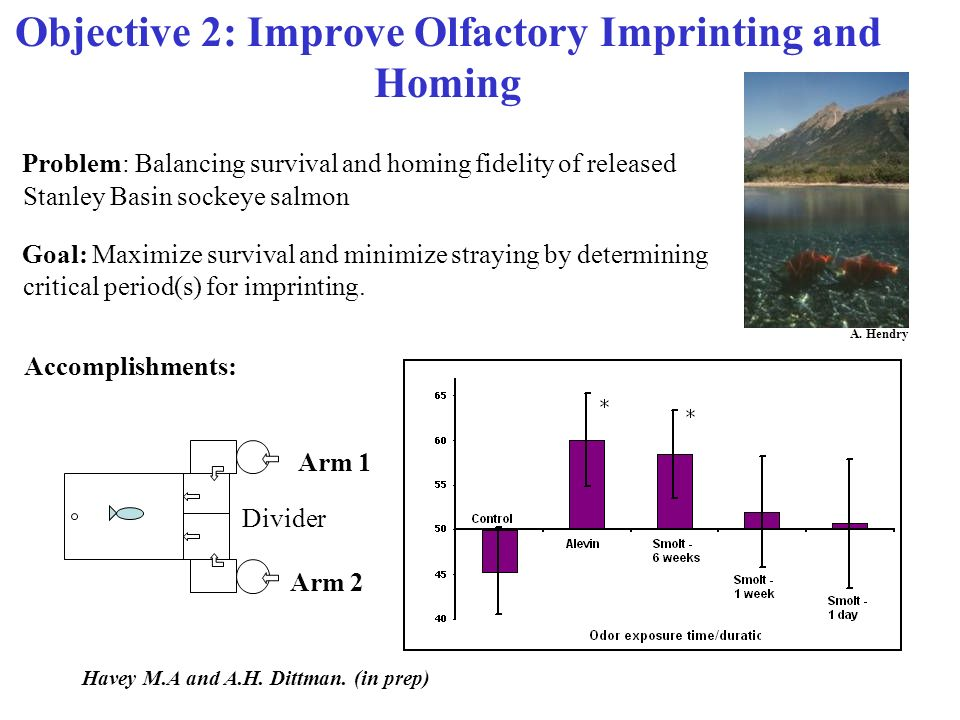 Objective 2: Improve Olfactory Imprinting and Homing Problem: Balancing survival and homing fidelity of released Stanley Basin sockeye salmon Goal: Maximize survival and minimize straying by determining critical period(s) for imprinting.