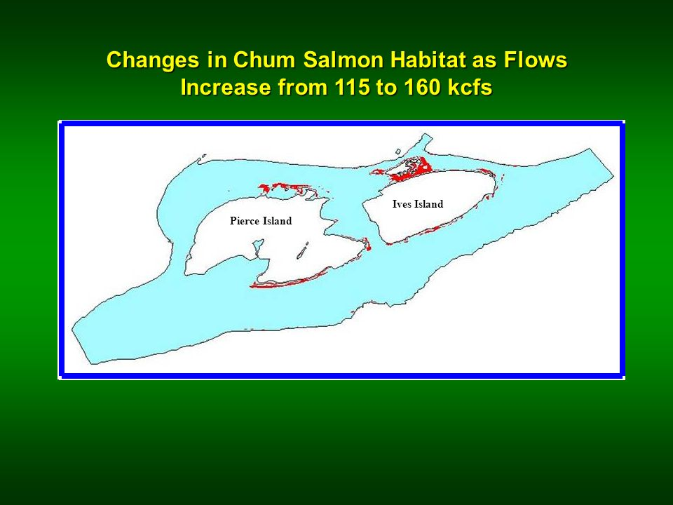 Changes in Chum Salmon Habitat as Flows Increase from 115 to 160 kcfs Ives Island Pierce Island