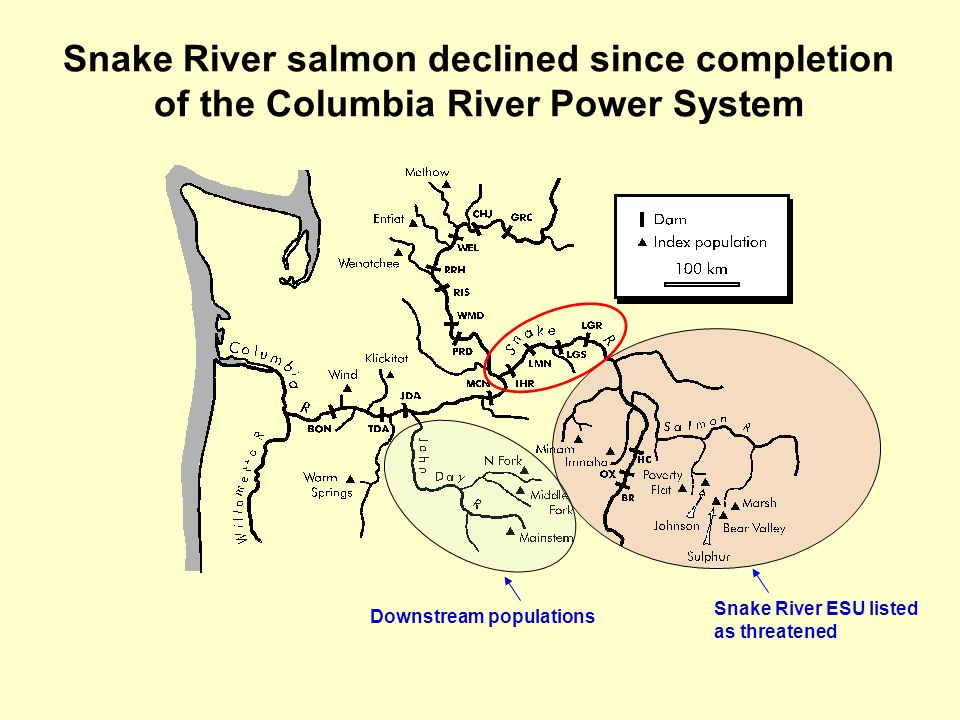 Snake River salmon declined since completion of the Columbia River Power System Snake River ESU listed as threatened Downstream populations