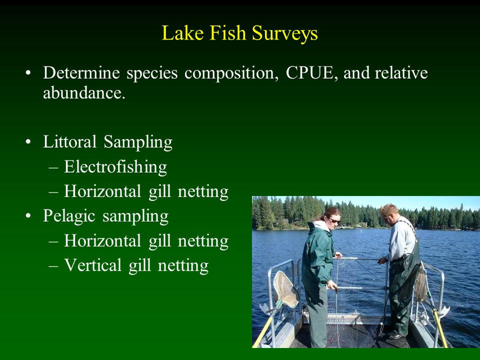 Lake Fish Surveys Determine species composition, CPUE, and relative abundance.