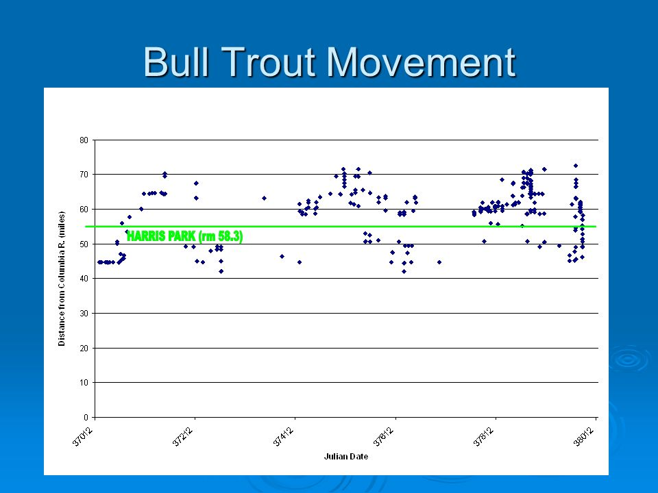 Bull Trout Movement