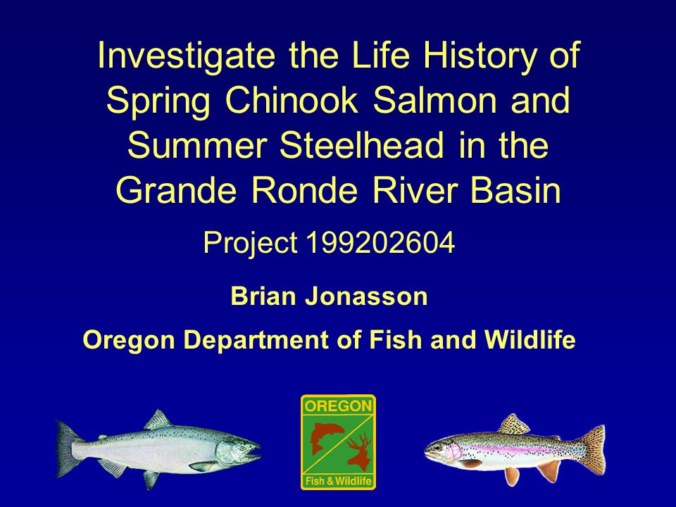 Investigate the Life History of Spring Chinook Salmon and Summer Steelhead in the Grande Ronde River Basin Project Brian Jonasson Oregon Department of Fish and Wildlife