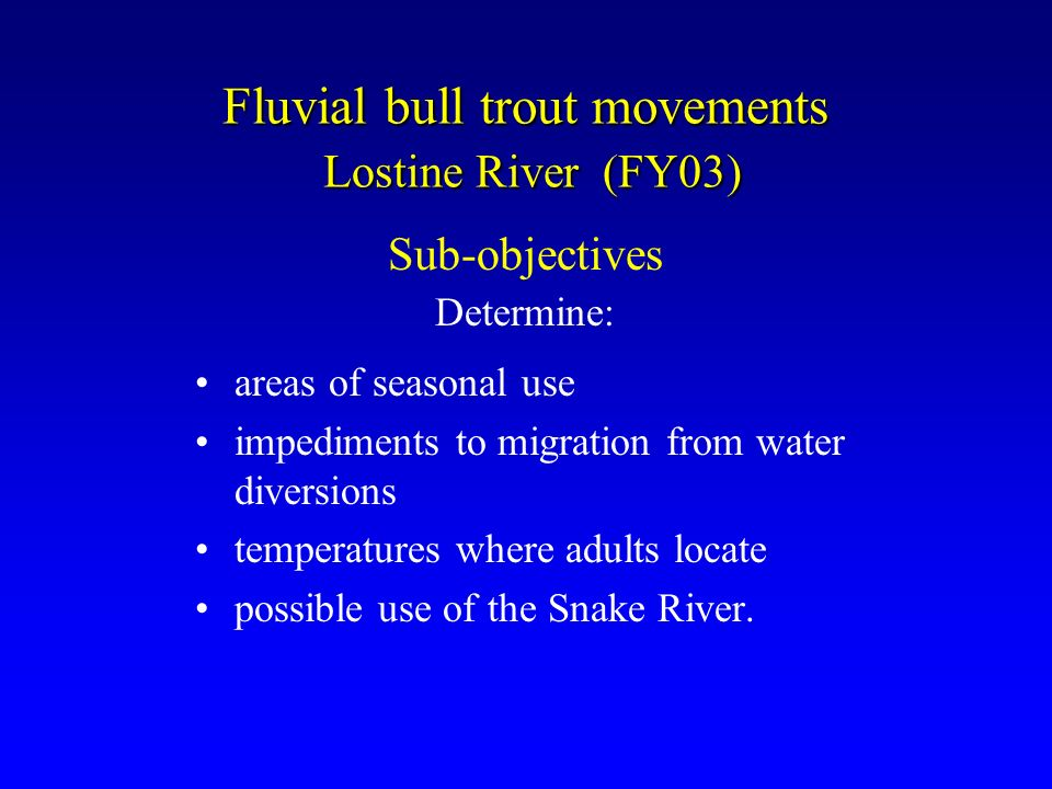 Fluvial bull trout movements Lostine River (FY03) areas of seasonal use impediments to migration from water diversions temperatures where adults locate possible use of the Snake River.