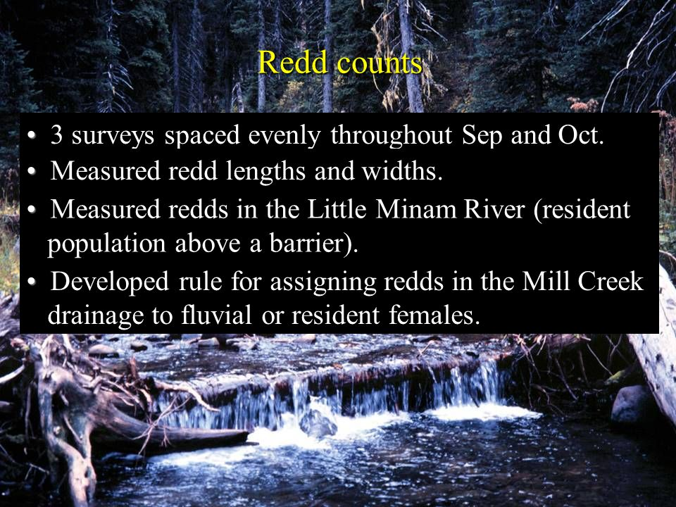 Redd counts 3 surveys spaced evenly throughout Sep and Oct.