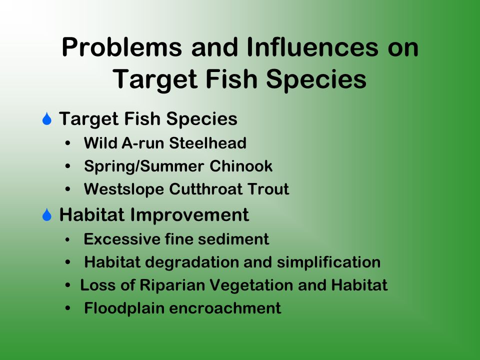 Problems and Influences on Target Fish Species Target Fish Species Wild A-run Steelhead Spring/Summer Chinook Westslope Cutthroat Trout Habitat Improvement Excessive fine sediment Habitat degradation and simplification Loss of Riparian Vegetation and Habitat Floodplain encroachment