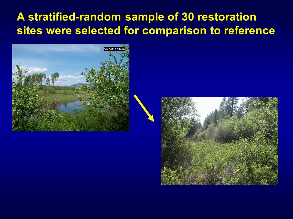 A stratified-random sample of 30 restoration sites were selected for comparison to reference