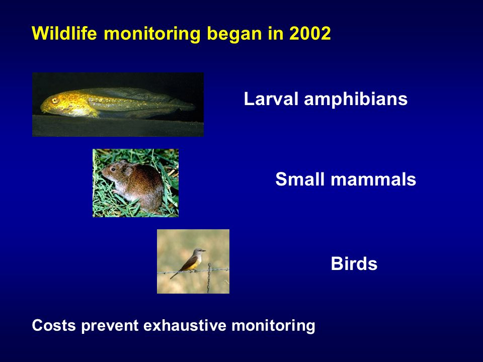 Wildlife monitoring began in 2002 Costs prevent exhaustive monitoring Larval amphibians Birds Small mammals