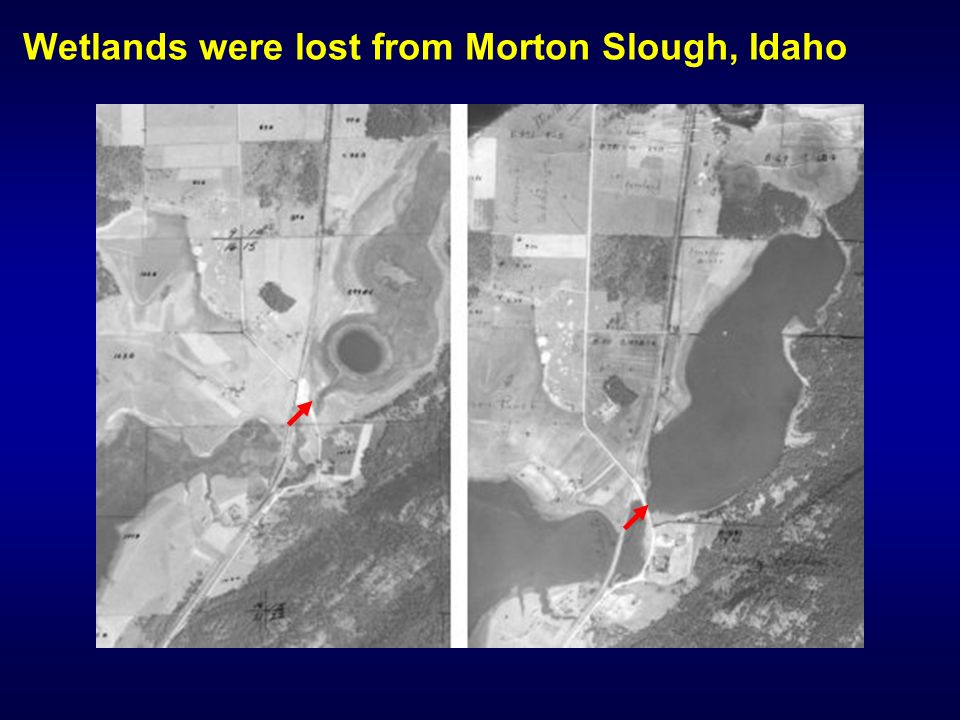 Wetlands were lost from Morton Slough, Idaho