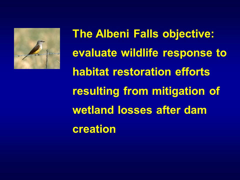 The Albeni Falls objective: evaluate wildlife response to habitat restoration efforts resulting from mitigation of wetland losses after dam creation