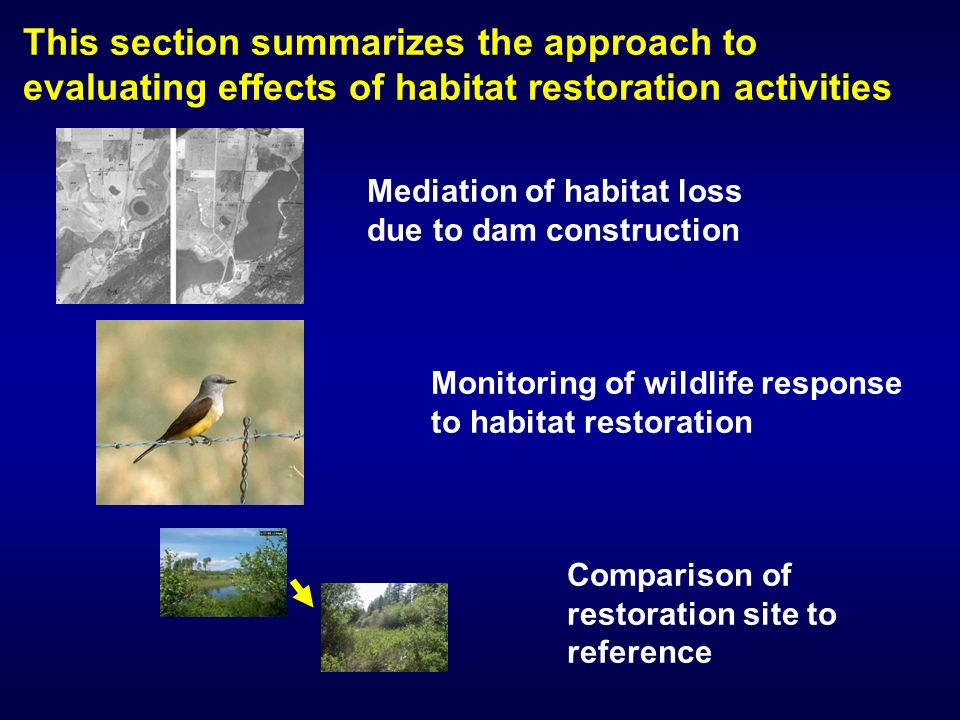 This section summarizes the approach to evaluating effects of habitat restoration activities Mediation of habitat loss due to dam construction Monitoring of wildlife response to habitat restoration Comparison of restoration site to reference